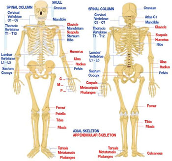 Skeleton Injury Map