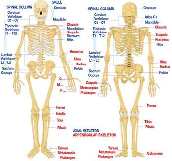 Skeleton Injury Map